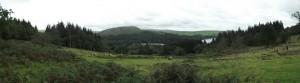 Dartmoor Bushcraft